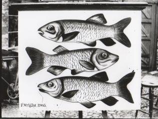 Three Fishes Inn Sign
