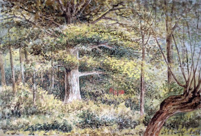 Oak Tree Newton Lane
