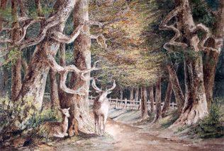 Pair of Deer in Wood